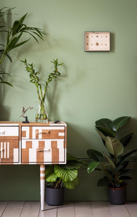 Flowerpot, Wall, Leaf, Interior design, Botany, Display device, Houseplant, Home accessories, Clock, Plant stem,