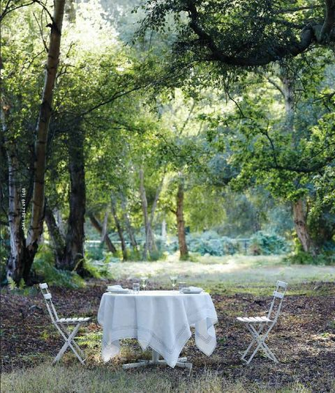 Nature, Tablecloth, Plant, Linens, Sunlight, Forest, Trunk, Home accessories, Woodland, Deciduous,