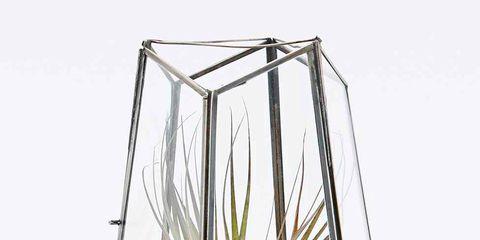 Pet supply, Botany, Terrestrial plant, Aquarium decor, Houseplant, Aquatic plant, Transparent material, Plant stem, Bird supply, Fish supply,