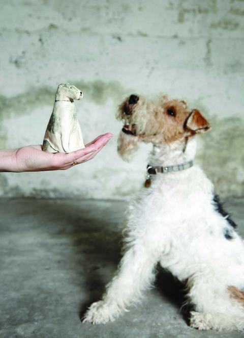 Dog breed, Vertebrate, Carnivore, Dog, Snout, Companion dog, Wire hair fox terrier, Pet supply, Terrier, Fox terrier,