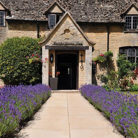 Plant, Window, Shrub, Purple, Lavender, Garden, House, Residential area, Door, Real estate,
