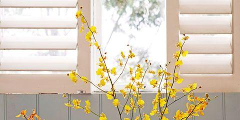 Blue, Fluid, Liquid, Yellow, Drinkware, Bottle, Glass, Flower, Plastic bottle, Twig,