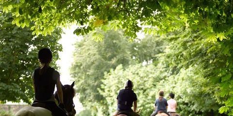 Human, Organism, Horse, Vertebrate, Recreation, Working animal, Bridle, Halter, Horse tack, Horse supplies,