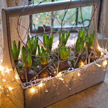Botany, Twig, Plant stem, Annual plant, Transparent material, Greenhouse,