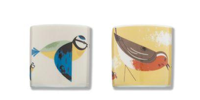 Bird, Beak, Feather, Adaptation, Teal, Aqua, Turquoise, Art paint, Perching bird, Songbird,
