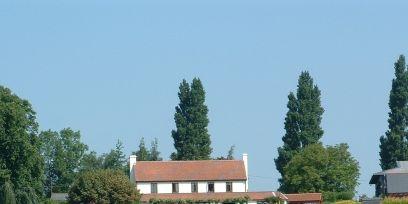 Plant, Farm, Agriculture, Tree, Landscape, Field, Land lot, Rural area, Plantation, Roof,