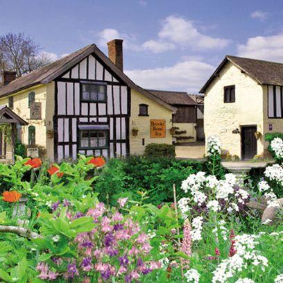 Window, Plant, Shrub, Property, House, Residential area, Flower, Home, Neighbourhood, Garden,