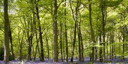 Natural environment, Plant, Plant community, Forest, Woodland, Wildflower, Purple, Groundcover, Nature reserve, Subshrub,