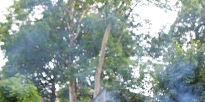 Branch, Wood, Rock, Woody plant, Trunk, Sunlight, Terrestrial plant, Twig, Forest, Bedrock,