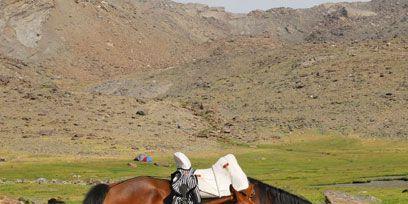 Brown, Horse, Horse supplies, Landscape, Pasture, Mammal, Sorrel, Plain, Highland, Working animal,