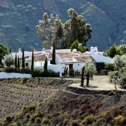 Plant, Tree, House, Rural area, Roof, Village, Hill station, Cottage, Farmhouse, Mountain village,