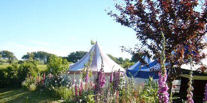 Plant, Shrub, Garden, Flower, Purple, Botany, Lavender, Tent, Shade, Yard,