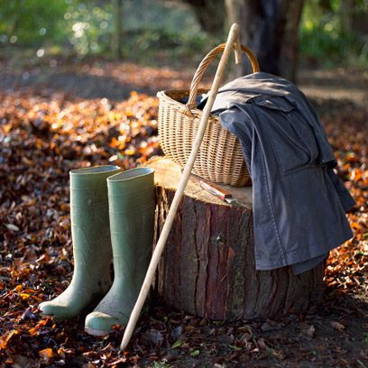 Leaf, Deciduous, Autumn, Rain boot, Boot, Twig, Woodland, Northern hardwood forest,