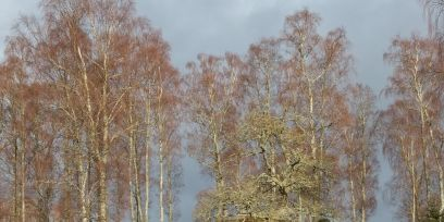 Natural landscape, Plant community, Tent, Biome, Rural area, Forest, Grassland, Camping, Tarpaulin, Woodland,