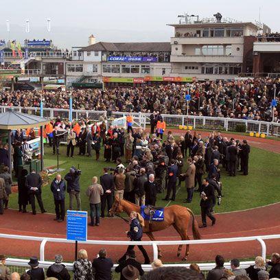Crowd, Sport venue, Audience, Stadium, Public event, Animal sports, Fan, Working animal, Horse, Arena,