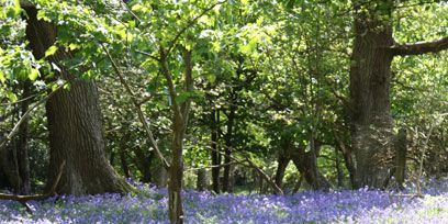 Natural environment, Plant, Plant community, Flower, Tree, Wildflower, Forest, Woodland, Groundcover, Nature reserve,