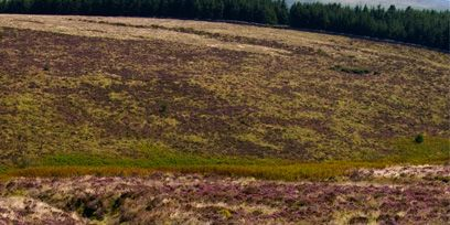 Natural landscape, Horse, Pasture, Vertebrate, Landscape, Mammal, Grassland, Working animal, Terrestrial animal, Ranch,