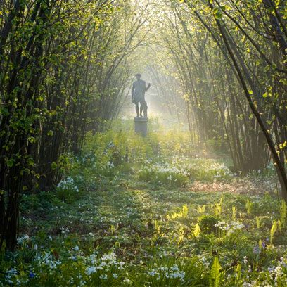 Natural landscape, People in nature, Nature, Woodland, Forest, Tree, Atmospheric phenomenon, Sunlight, Natural environment, Light,