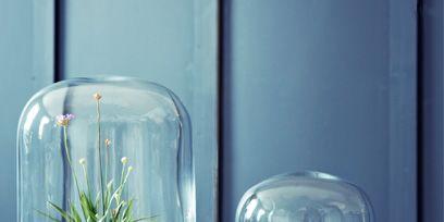 Flowerpot, Glass, Plant, Interior design, Transparent material, Terrestrial plant, Houseplant, Annual plant, Aquarium decor, Pottery,