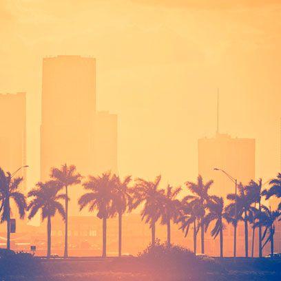 Atmospheric phenomenon, Tower block, City, Arecales, Amber, Woody plant, Skyscraper, Skyline, Morning, Cityscape,