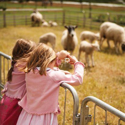Vertebrate, Mammal, Farm, Pink, Pasture, Interaction, Rural area, Herd, Terrestrial animal, Baby & toddler clothing,