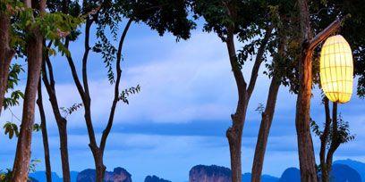 Plant, Natural landscape, Tree, Landscape, Resort, Lantern, Azure, Outdoor furniture, Swimming pool, Majorelle blue,
