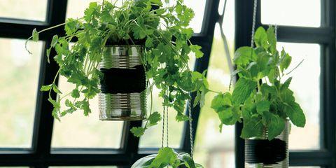 Green, Leaf, Fixture, Botany, Daylighting, Plant stem, Annual plant, Houseplant, Flowerpot, Transparent material,
