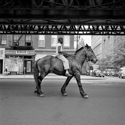 Horse supplies, Bridle, Halter, Horse, Rein, Horse tack, Working animal, Street, Saddle, Liver,
