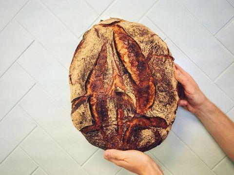 Sourdough, Leaf, Food, Tree, Plant, Vegetarian food, Bread, Cap,
