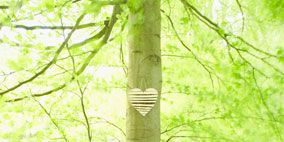 Nature, Vegetation, Branch, Green, Natural environment, Plant community, Leaf, Woody plant, Nature reserve, Forest,
