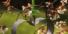 Nature, Branch, Leaf, Fruit, Natural foods, Botany, Twig, Petal, Apple, Produce,