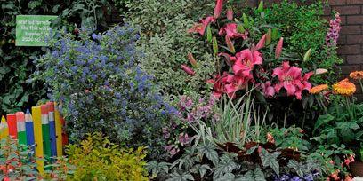 Shrub, Plant, Flower, Garden, Petal, Flowering plant, Botany, Groundcover, Annual plant, Botanical garden,