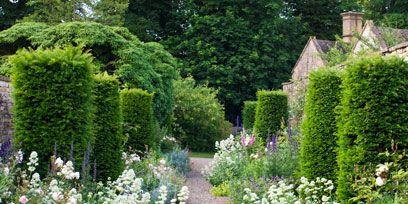 Shrub, Plant, Garden, Flower, Groundcover, Subshrub, Flowering plant, Hedge, Lavender, Annual plant,