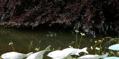 Watercourse, Pond, Wetland, Marine mammal, Fluvial landforms of streams, Lacustrine plain,