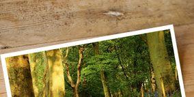 Nature, Vegetation, Wood, Natural environment, Green, Plant community, Leaf, Natural landscape, Botany, Rectangle,