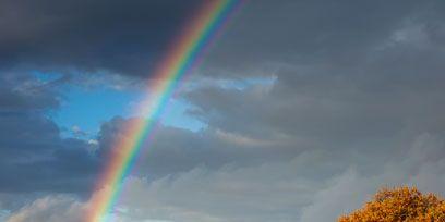 Nature, Vegetation, Natural landscape, Daytime, Sky, Green, Rainbow, Leaf, Landscape, Colorfulness,