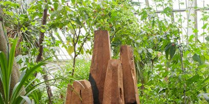 Wood, Plant community, Soil, Terrestrial plant, Grass family, Hardwood, Natural material, Perennial plant,
