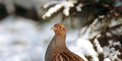 Winter, Beak, Bird, Vertebrate, Freezing, Snow, Adaptation, Ecoregion, Grass family, Fawn,
