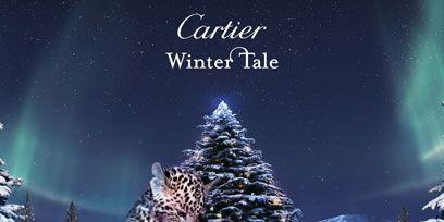 Winter, Snow, Adaptation, Woody plant, Terrestrial animal, Freezing, Carnivore, Leopard, Felidae, Evergreen,