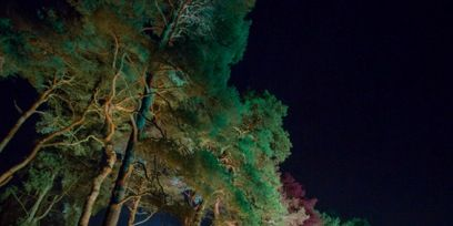 Nature, Night, Vegetation, Green, Darkness, Woody plant, Midnight, Trunk, Landscape lighting, Water feature,