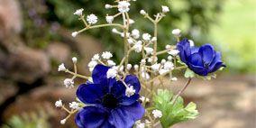 Blue, Petal, Flower, Glass, Majorelle blue, Flowering plant, Drinkware, Cut flowers, Botany, Cobalt blue,