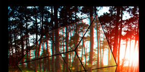 Nature, Natural environment, Branch, Leaf, Amber, Colorfulness, Sunlight, Woody plant, Tints and shades, Biome,