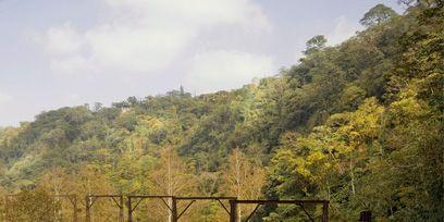 Vegetation, Forest, Hill station, Bridge, Rolling stock, Track, Jungle, Valley, Rainforest, Chaparral,