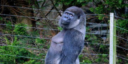 Daytime, Organism, Leaf, Primate, Nature reserve, Adaptation, Terrestrial animal, Snout, Grey, Wildlife,
