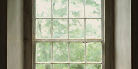 Window, Carnivore, Room, Small to medium-sized cats, Felidae, Cat, Interior design, Sunlight, Daylighting, Glass,