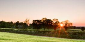 Vegetation, Nature, Grass, Natural environment, Natural landscape, Agriculture, Plant community, Field, Landscape, Plain,