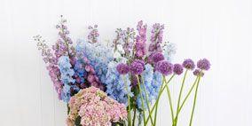 Flower, Purple, Violet, Lavender, Flowerpot, Petal, Flower Arranging, Bouquet, Flowering plant, Cut flowers,