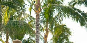 Hat, Tree, Arecales, Summer, Woody plant, Headgear, Sun hat, Vacation, Basket, Travel,
