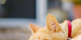 Small to medium-sized cats, Whiskers, Cat, Carnivore, Felidae, Vertebrate, Comfort, Snout, Fur, Close-up,