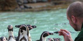 Penguin, Body of water, Nature, Human, Organism, Daytime, Natural environment, Vertebrate, Bird, Beak,